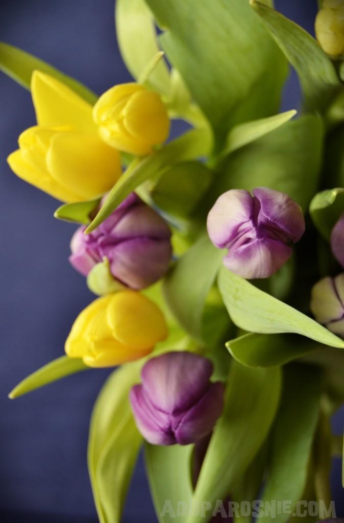 tulipany zgarnij torta