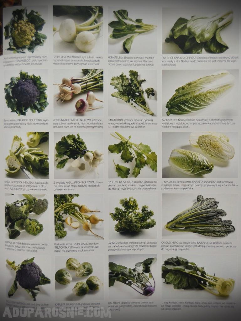 kuchnia. produkty spożywcze z czterech stron świata (12)